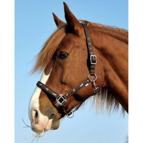Päitsed Active Horse