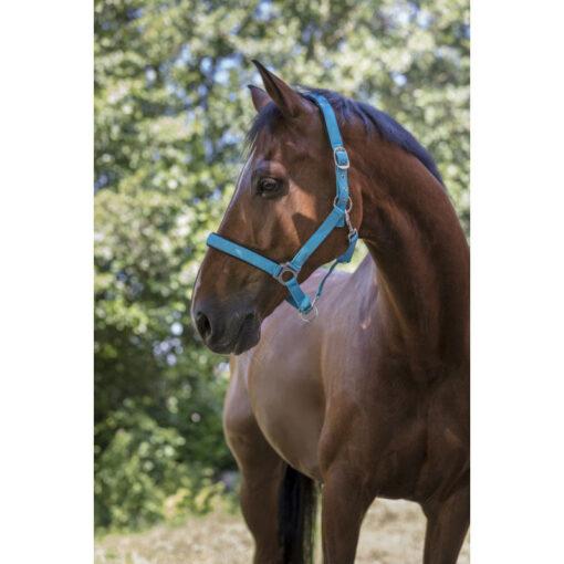 Norton päitsed Fluo Lined sinine